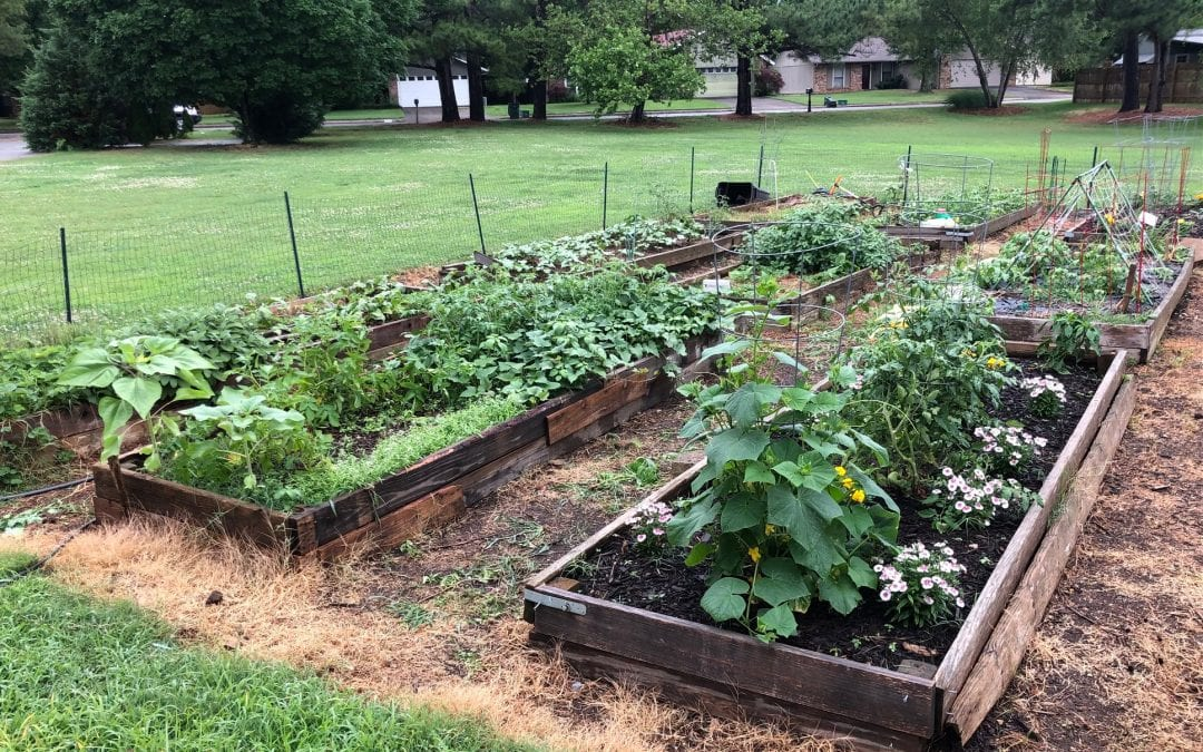 Another great year has begun for our Family Gardens!